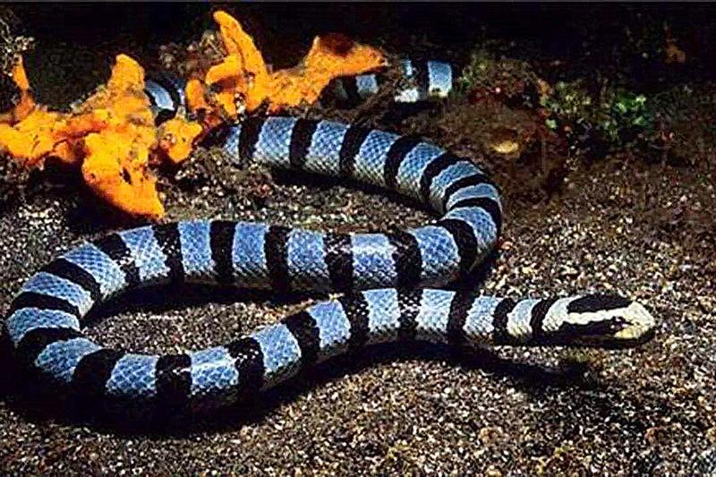 海蛇.jpg