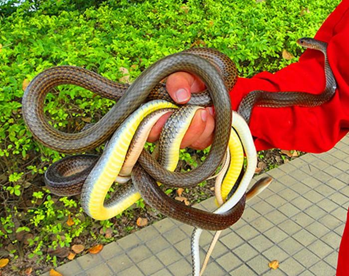 毒蛇 (4).JPG