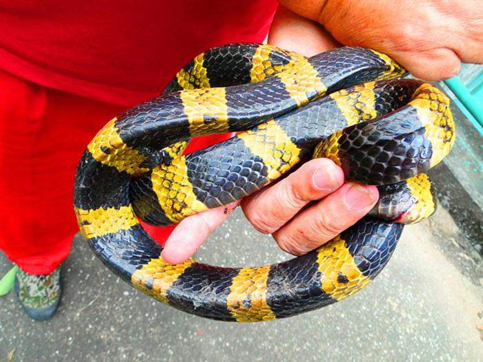 毒蛇 (6).JPG