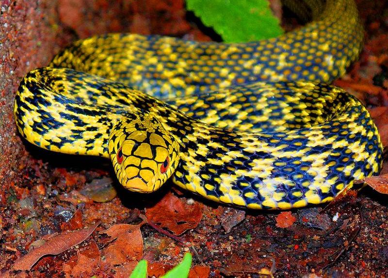 毒蛇 (8).jpg