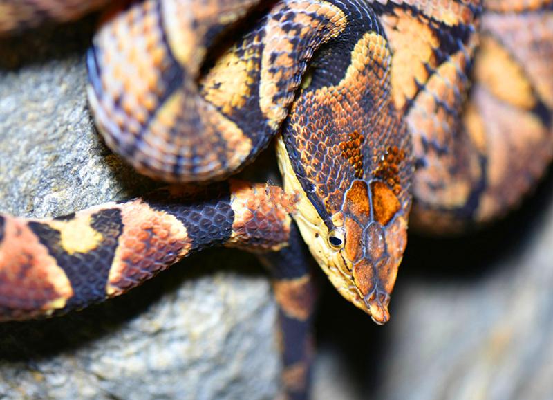 毒蛇 (9).jpg